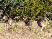 Texas Hunting Ranch for Sale 115 Acres   Kimble County,  Texas